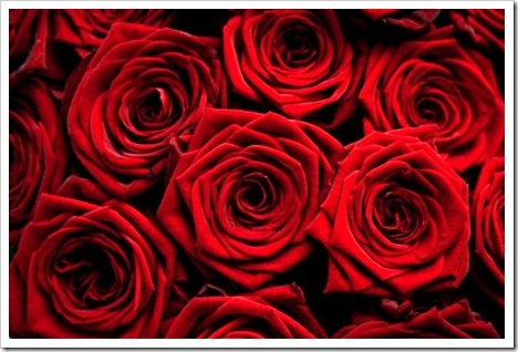 if-roses-are not red